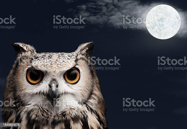 African eagle owl picture id154961676?b=1&k=6&m=154961676&s=612x612&h=71npy kj hl5ijv35ec1lec85x9yrj4 bzihtjgrpay=