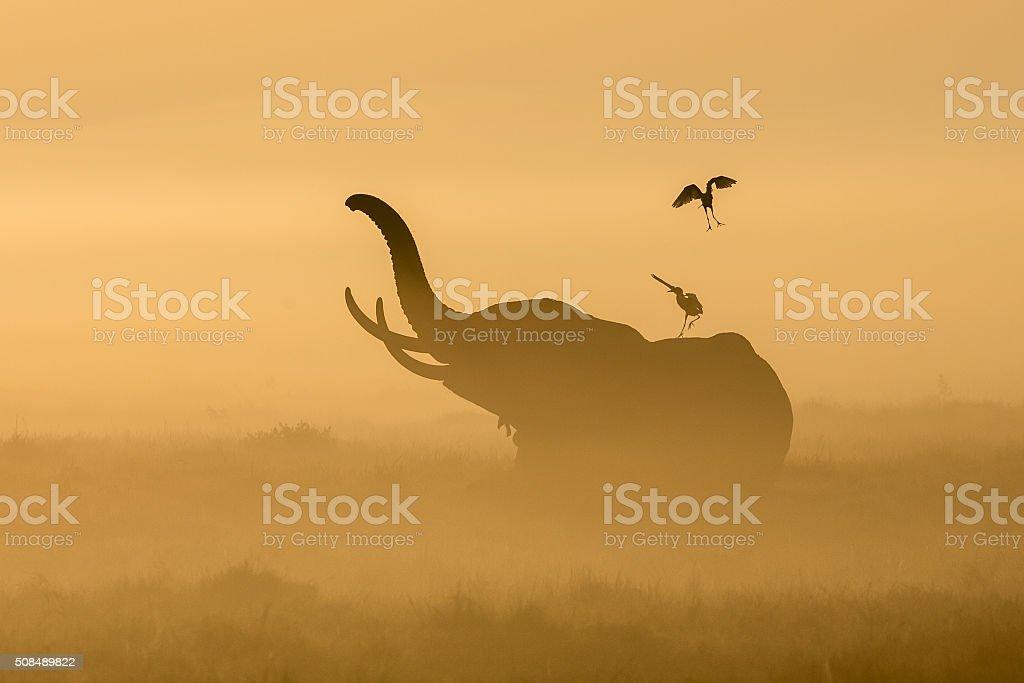 African Elephant at sunrise in Amboseli, Kenya stock photo