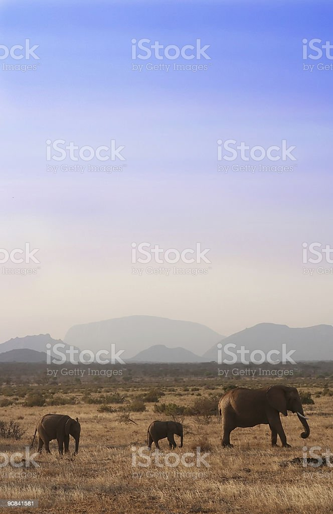 African Elephant Family royalty-free stock photo