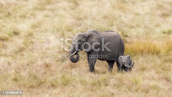 African elephant mother and baby. Masa Mara, Kenya.