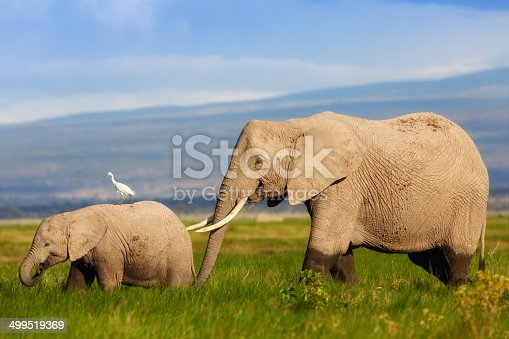 182061384 istock photo African Elephant mother with her calf in the swamp 499519369