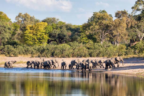 African elephant, Namibia, Africa safari wildlife stock photo