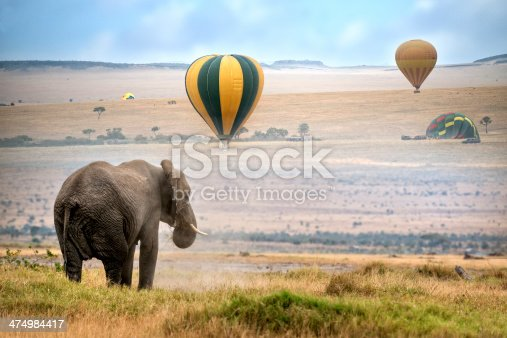 African elephant ,  foggy morning, ballons landing on background,  Masai Mara National Reserve, Kenya