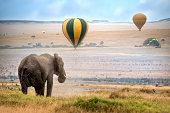 African elephant ,  foggy morning, ballons landing on background,  Masai Mara National Reserve, Kenya