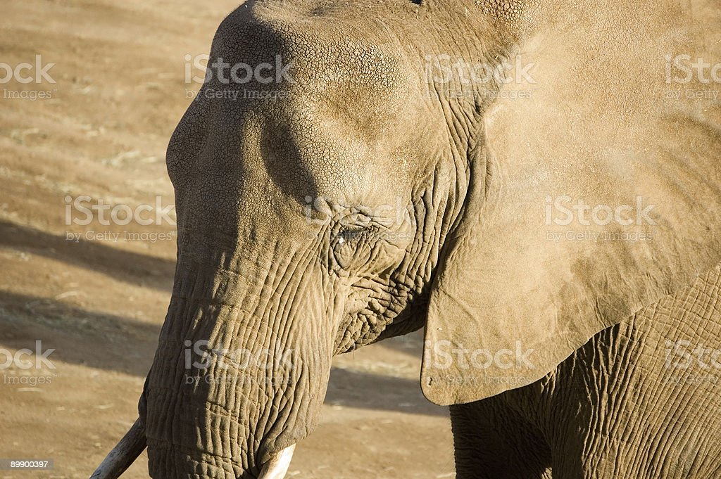 African Elefant Lizenzfreies stock-foto