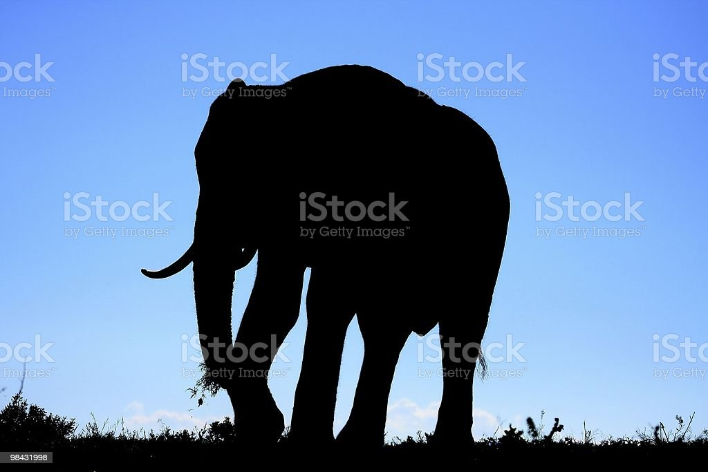 Elefante africano Silhouette foto stock royalty-free