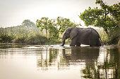 African Elephant, Animal, Elephant, Africa, Botswana