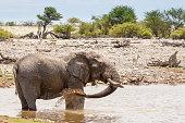African Elephant Taking a Mud Bath at a Waterhole, Namibia