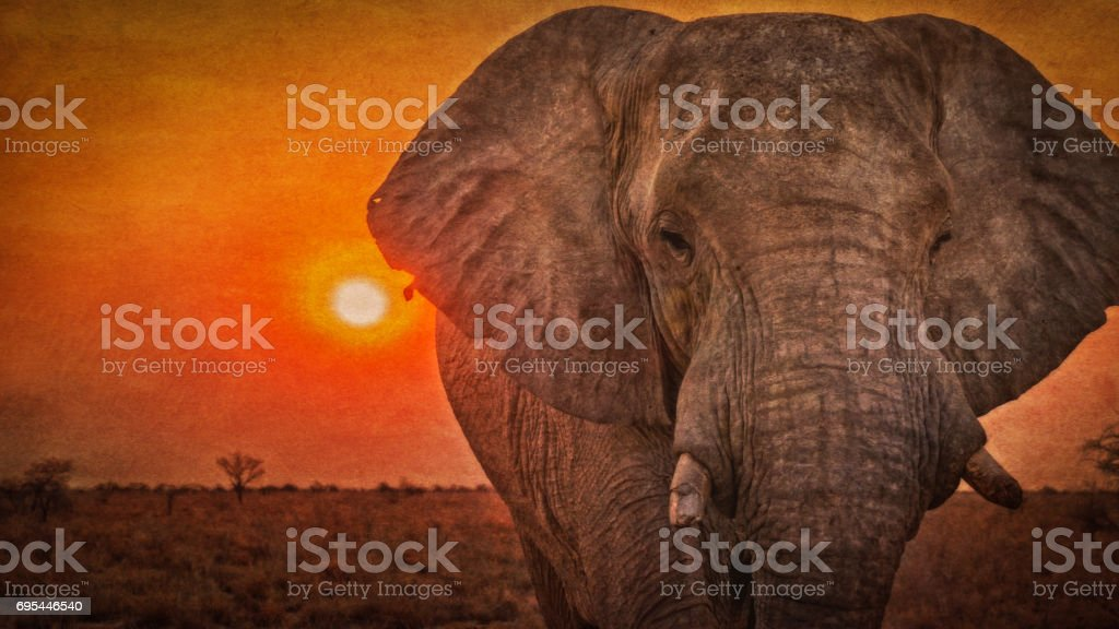 African elephant with broken tusks, at sunset, Etosha National Park, Namibia. Texture added. stock photo