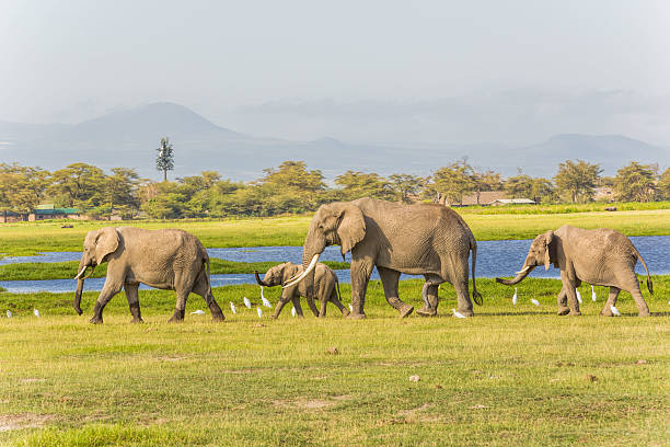 "African Elephants and cattle egrets [url=http://www.istockphoto.com/search/lightbox/11700863/#1c2c635a] ""See more ELEPHANT images""  [url=file_closeup?id=36600984][img]/file_thumbview/36600984/1[/img][/url] [url=file_closeup?id=44773224][img]/file_thumbview/44773224/1[/img][/url]  [url=file_closeup?id=44772670][img]/file_thumbview/44772670/1[/img][/url]  [url=file_closeup?id=23390535][img]/file_thumbview/23390535/1[/img][/url] [url=file_closeup?id=20654641][img]/file_thumbview/20654641/1[/img][/url] [url=file_closeup?id=23385793][img]/file_thumbview/23385793/1[/img][/url] [url=file_closeup?id=20571283][img]/file_thumbview/20571283/1[/img][/url] [url=file_closeup?id=20654687][img]/file_thumbview/20654687/1[/img][/url] [url=file_closeup?id=20702677][img]/file_thumbview/20702677/1[/img][/url] [url=file_closeup?id=20451131][img]/file_thumbview/20451131/1[/img][/url] [url=file_closeup?id=20379608][img]/file_thumbview/20379608/1[/img][/url] [url=file_closeup?id=20305310][img]/file_thumbview/20305310/1[/img][/url] [url=file_closeup?id=20605469][img]/file_thumbview/20605469/1[/img][/url] [url=file_closeup?id=20458427][img]/file_thumbview/20458427/1[/img][/url] [url=file_closeup?id=20457980][img]/file_thumbview/20457980/1[/img][/url] [url=file_closeup?id=20377573][img]/file_thumbview/20377573/1[/img][/url] [url=file_closeup?id=35814010][img]/file_thumbview/35814010/1[/img][/url] [url=file_closeup?id=25489466][img]/file_thumbview/25489466/1[/img][/url] [url=file_closeup?id=37054032][img]/file_thumbview/37054032/1[/img][/url] [url=file_closeup?id=37169092][img]/file_thumbview/37169092/1[/img][/url] [url=file_closeup?id=20702784][img]/file_thumbview/20702784/1[/img][/url] [url=file_closeup?id=23385022][img]/file_thumbview/23385022/1[/img][/url] [url=file_closeup?id=20458462][img]/file_thumbview/20458462/1[/img][/url] [url=file_closeup?id=23385816][img]/file_thumbview/23385816/1[/img][/url] [url=file_closeup?id=37608952][img]/file_thumbview/37608952/1[/img][/url] animals with big penis stock pictures, royalty-free photos & images"