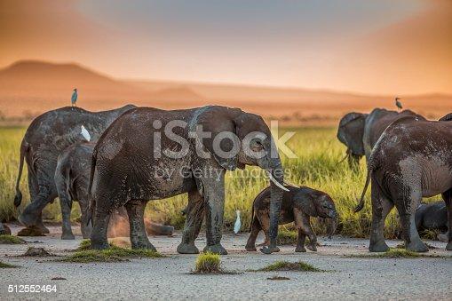182061384 istock photo African Elephants at Sunset 512552464