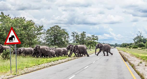 African elephants crossing Golden Highway, Namibia, Africa
