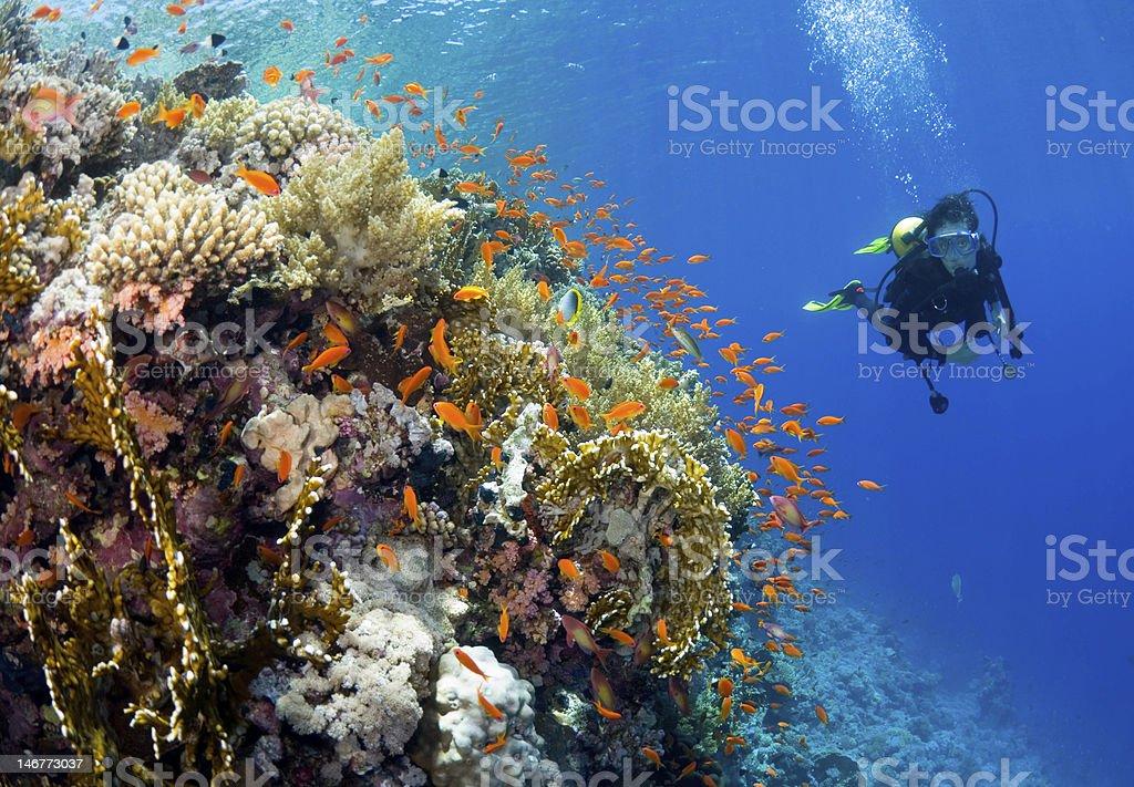 African explorer stock photo