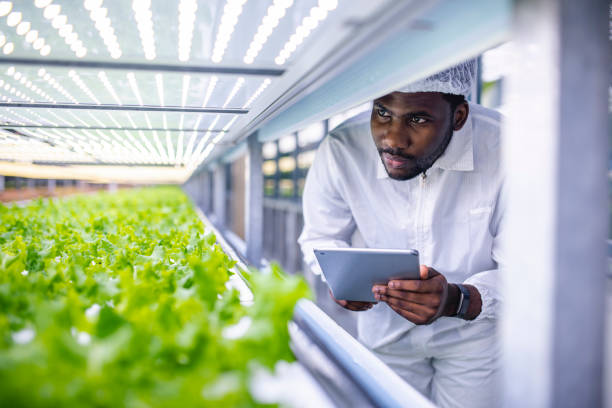 african farm worker noting progress of living lettuce growth - living a sustainable lifestyle stock pictures, royalty-free photos & images