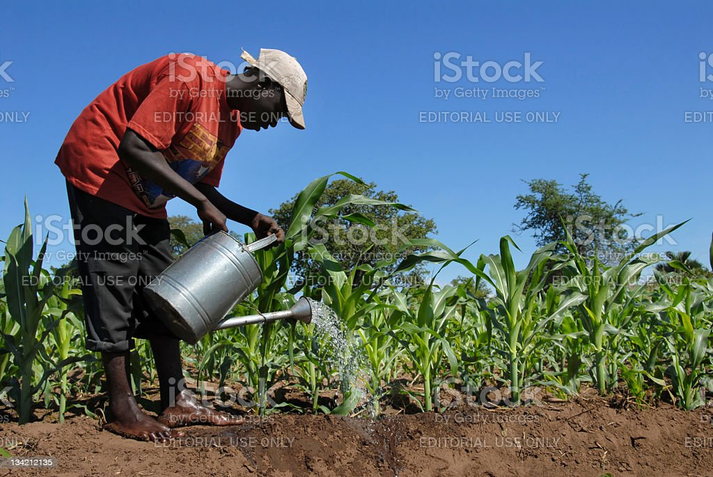 African farmer stock photo