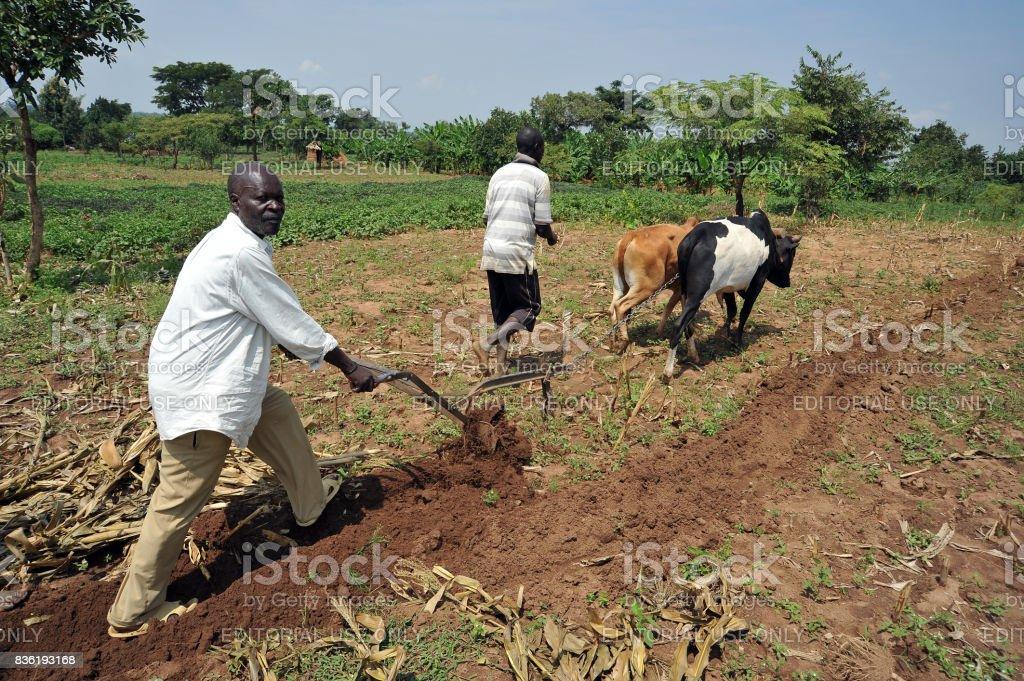 Afrikaanse boer foto