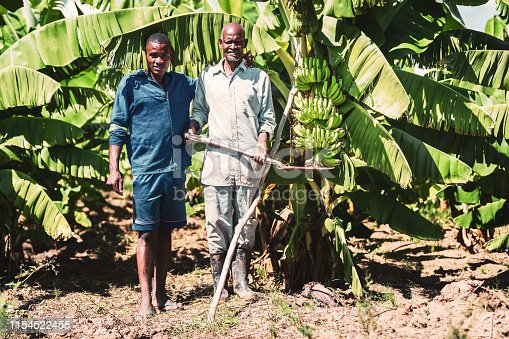 Africa, Farm, Hardwork - An old African farmer holding shovel with his son standing at their banana farm and facing the camera for a portrait