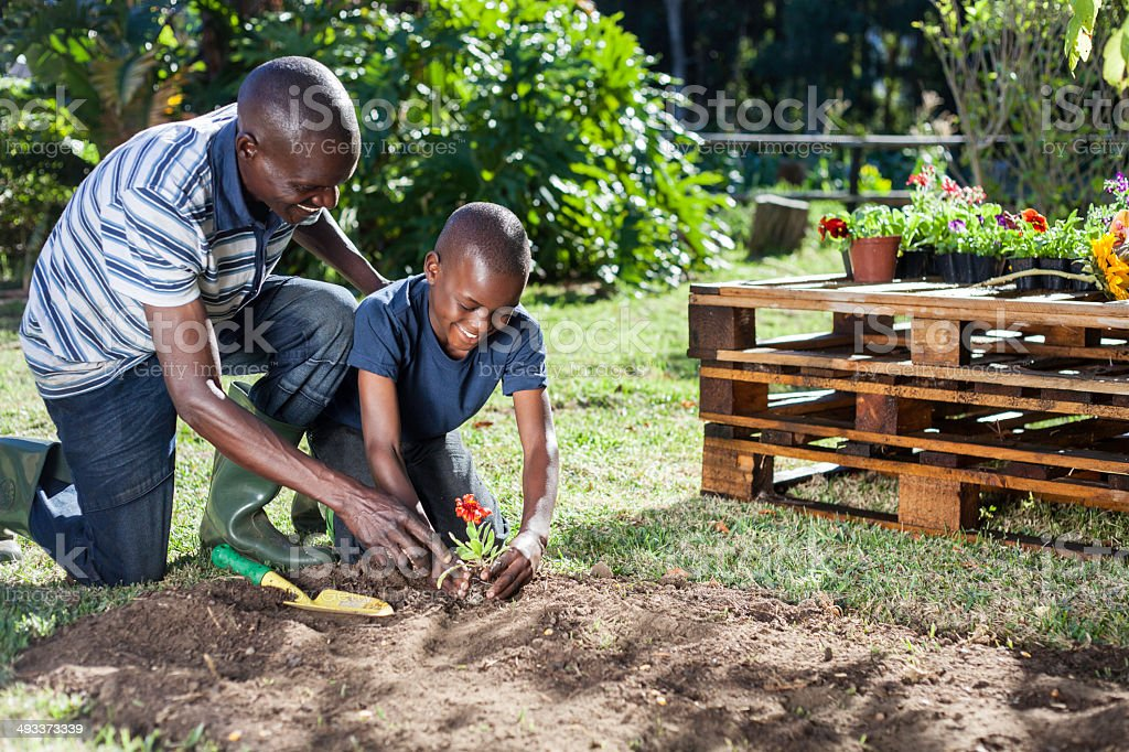 African father and son plant flowers together stock photo