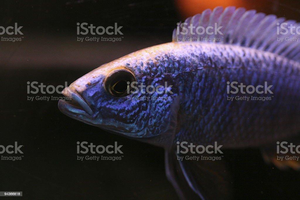 African fish stock photo