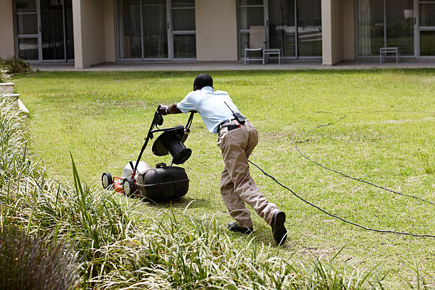 Image result for images for african cutting grass