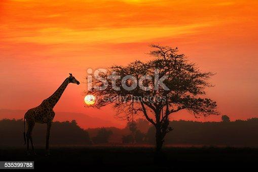 istock African Giraffe at sunrise 535399788