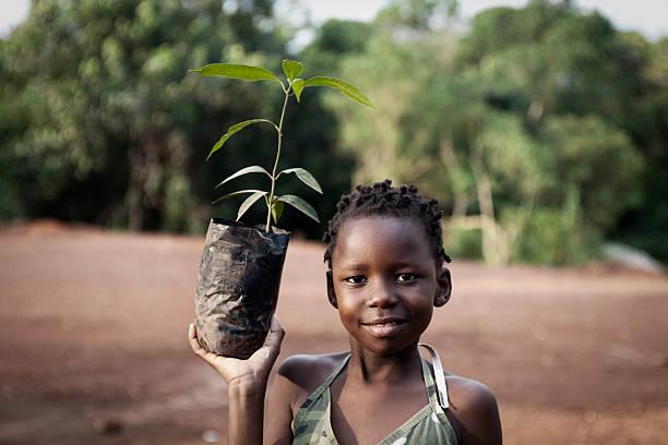 African girl planting mango tree stock photo