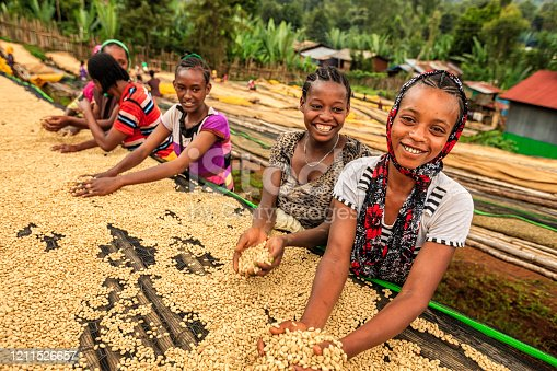 African girls and women sorting coffee beans on coffee farm, Ethiopia, Africa. Little children are working under tables - they picking up every single coffee bean dropped accidentally by women and putting these dropped coffee beans back on the tables. There are several species of Coffea - the coffee plant. The finest quality of Coffea being Arabica, which originated in the highlands of Ethiopia. Arabica represents almost 60% of the world's coffee production..