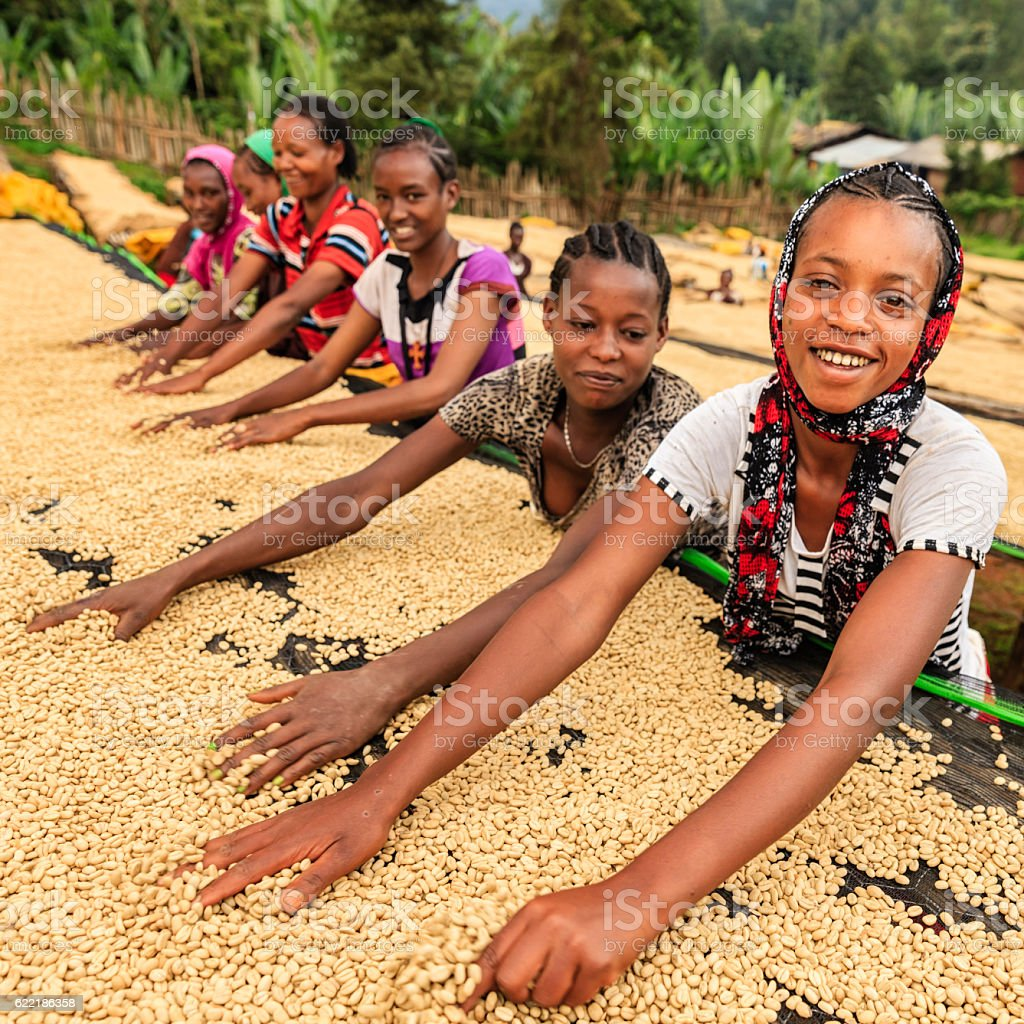 African girls and women sorting coffee beans, East Africa - Photo