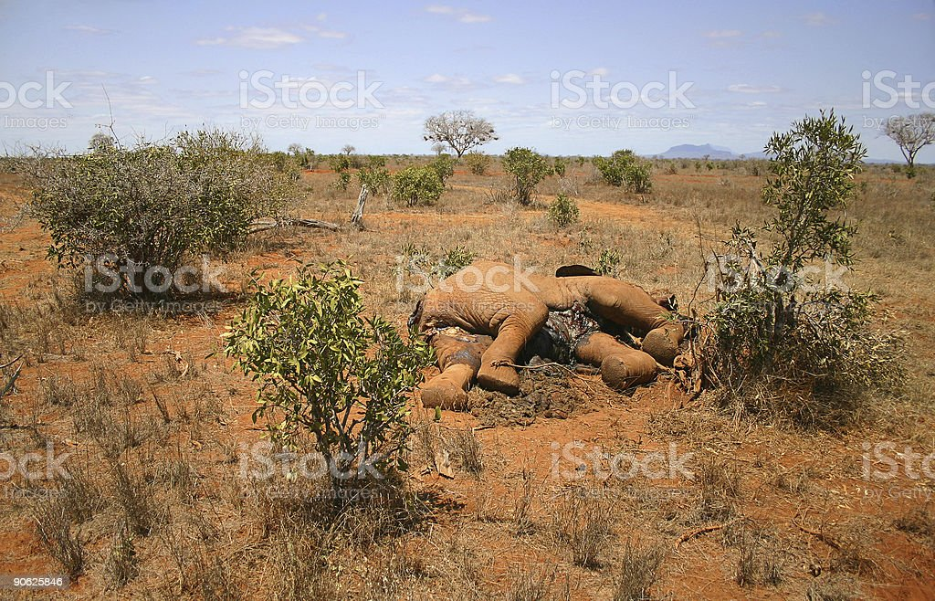 African Grassland, Dead Elephant stock photo