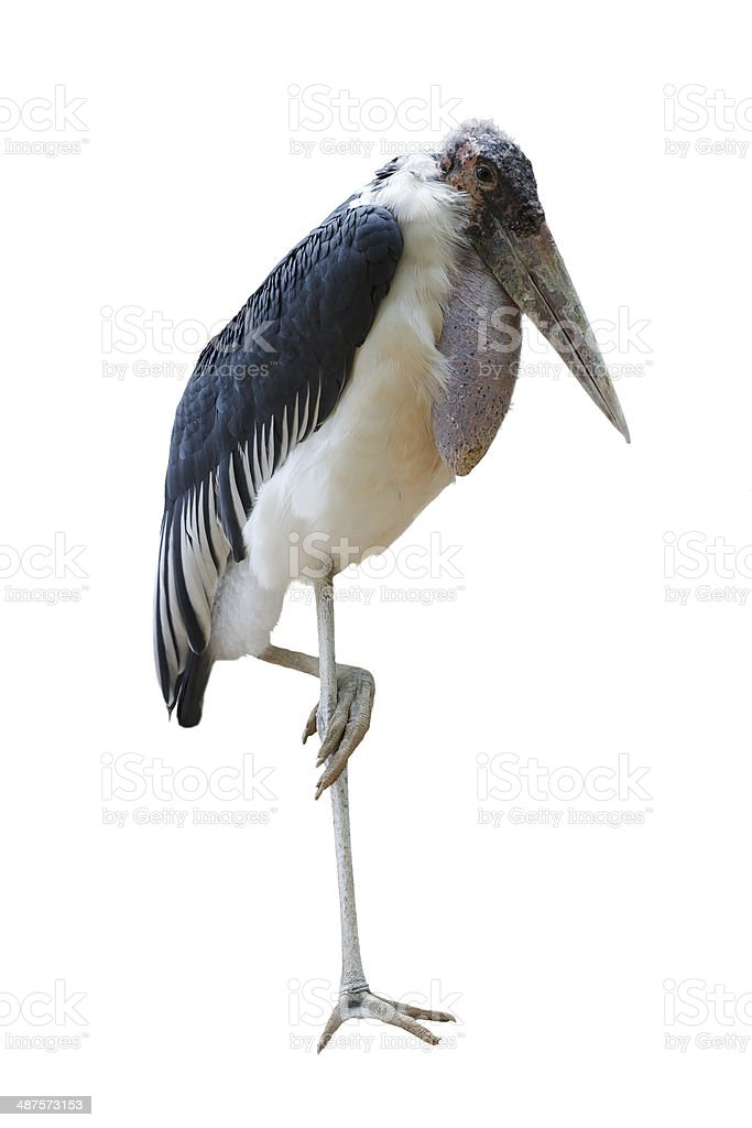 African heron royalty-free stock photo