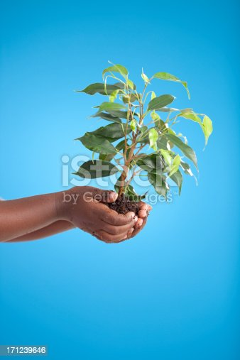 Close up African kid's hands holding green tree on blue background with copy space (side view).
