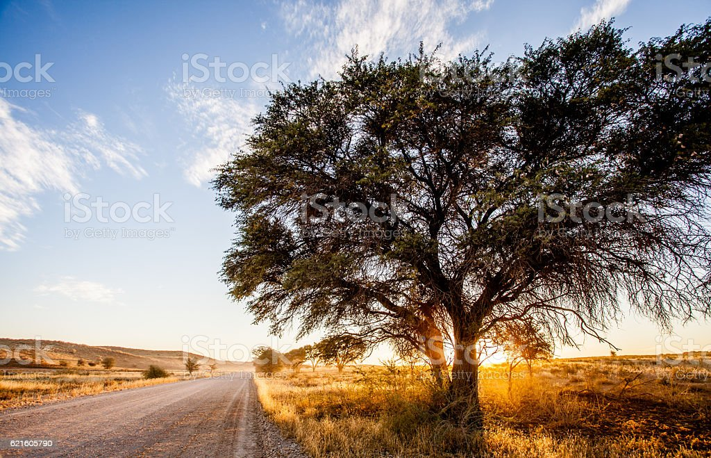 African landscape at dusk, in the fall stock photo