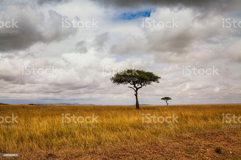 African landscape. Kenya National Park royalty-free stock photo