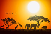 African landscape scene of safari animal savannah silhouette. Sunset background.