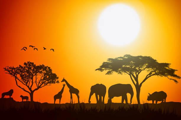afrikanische landschaft szene safari tiere savanne silhouette. sonnenuntergang hintergrund. - elefanten umriss stock-fotos und bilder