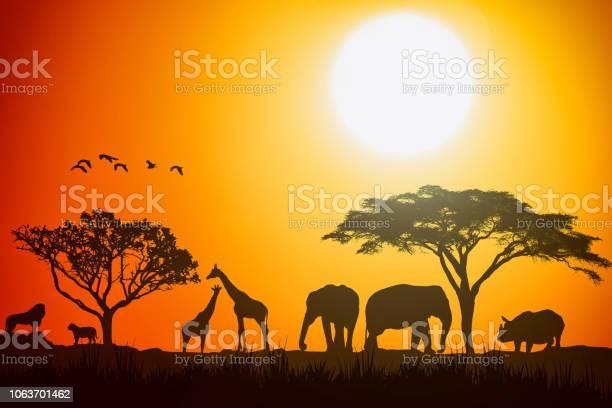 Photo of African landscape scene of safari animal savannah silhouette. Sunset background.