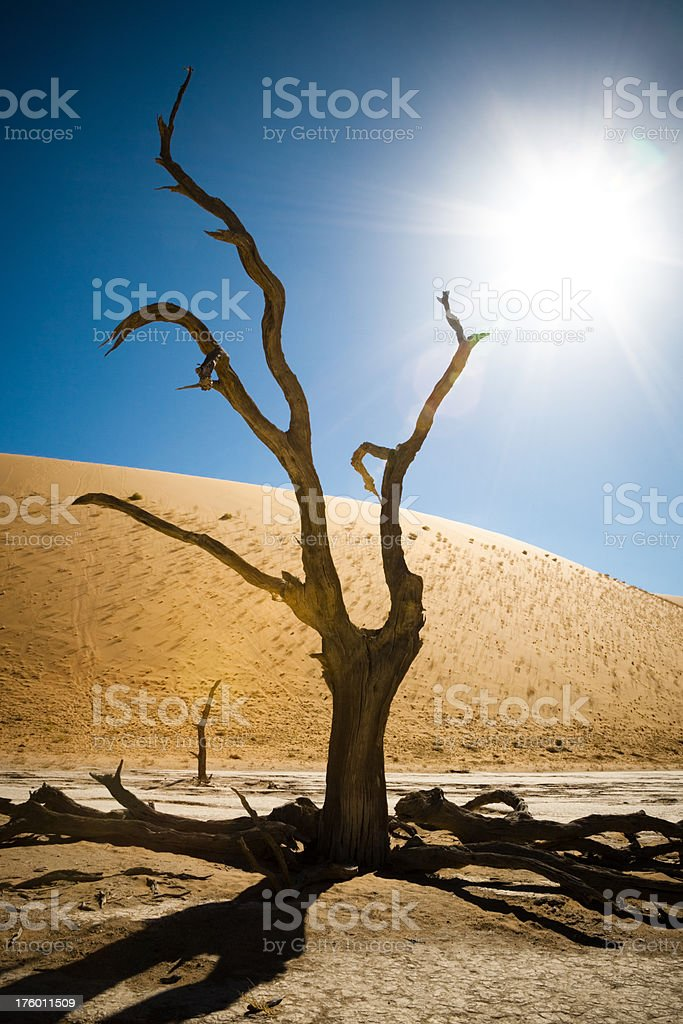 African Landscape Surreal Namibia royalty-free stock photo