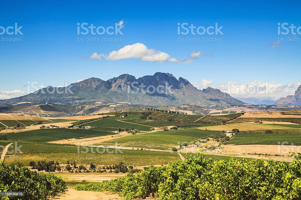 African Landscape Vineyard Region Stellenbosch South Africa stock photo