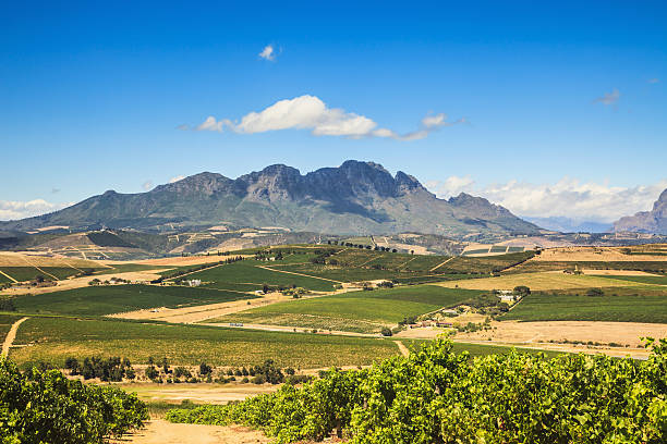 African Landscape Vineyard Region Stellenbosch South Africa view over the vineyards of Stellenbosch, near Cape Town, to the mountain range at the horizon. South Africa. western cape province stock pictures, royalty-free photos & images