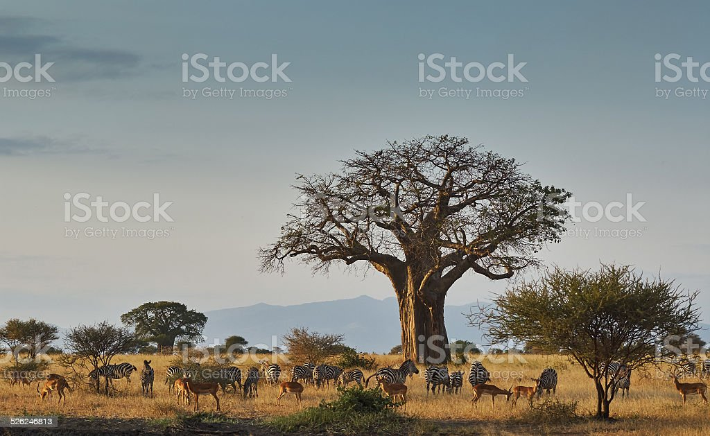 African landscape with animals stock photo