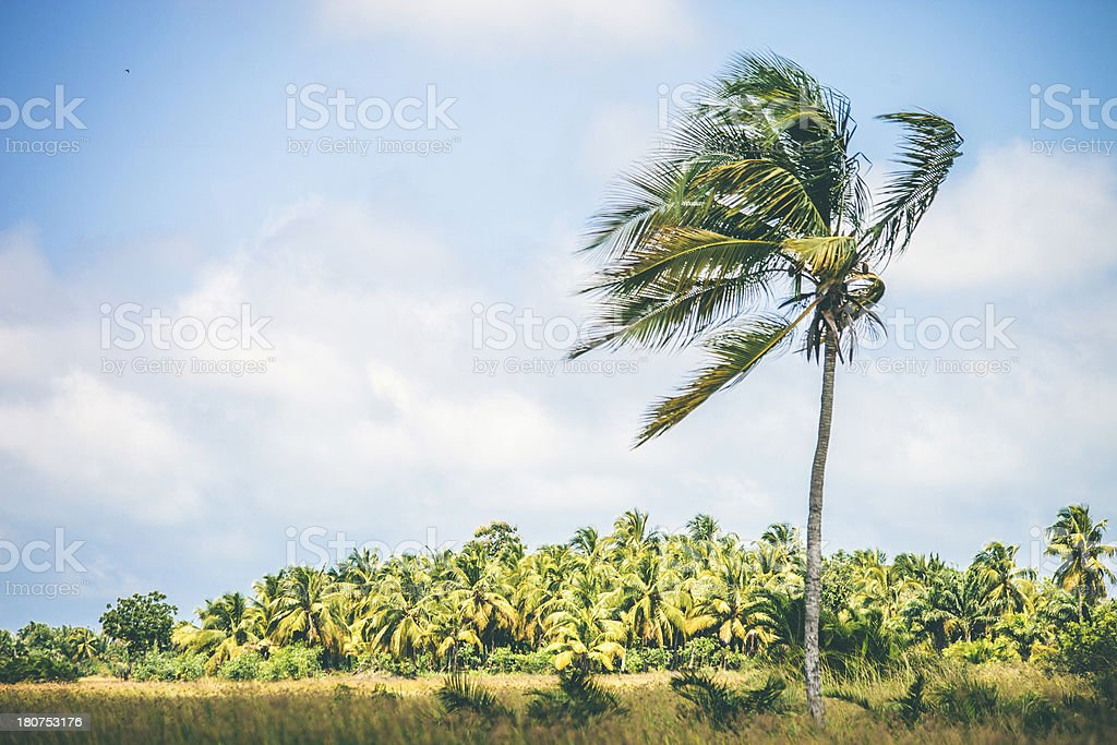 African landscape with palm tree. royalty-free stock photo