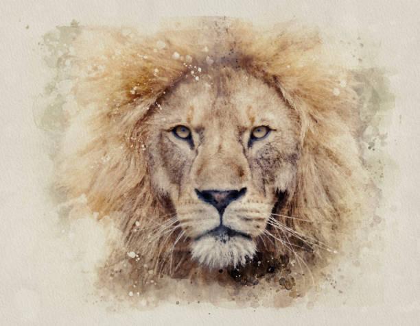 African male lion headshot looking into camera watercolour painting picture id1161570993?b=1&k=6&m=1161570993&s=612x612&w=0&h=j elnggdab2avehnmzyqpijmeferlcxdrnmmjg8vmaw=