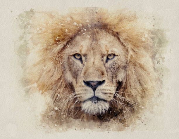African male lion headshot looking into camera watercolour painting African male lion headshot looking into camera Leo stock pictures, royalty-free photos & images