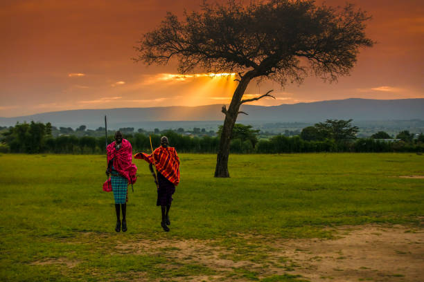 African Masai Warriors at Sunrise African Masai Warriors at Sunrise with Acacia Tree masai mara national reserve stock pictures, royalty-free photos & images