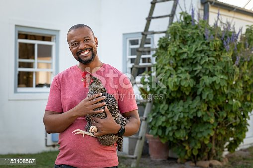 Cheerful mature black man holding hen and looking at camera. Portrait of happy african american farmer holding a brown hen outdoor. Smiling mature man with chicken in hand with copy space.