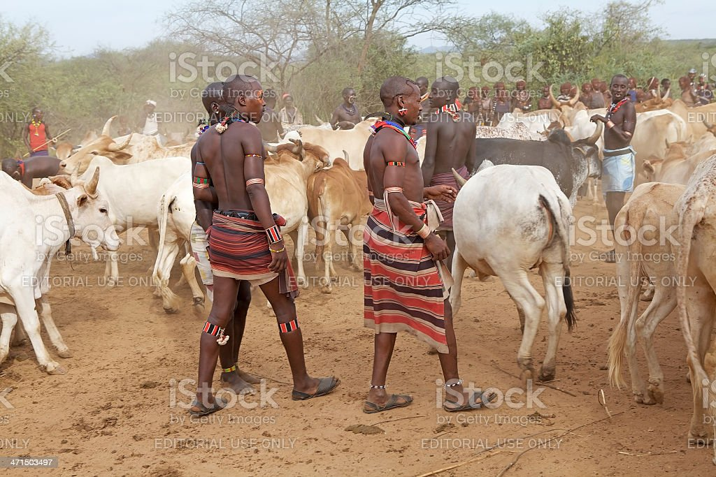 african men and cattle royalty-free stock photo