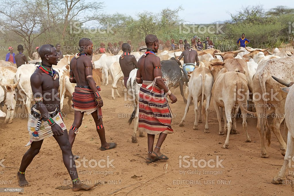 african men and cattle stock photo