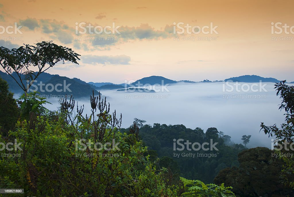 African morning - first daylight in the rainforest, Rwanda stock photo