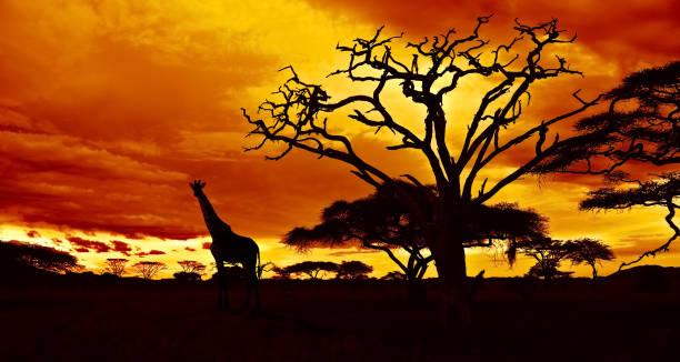 African night picture id658618296?b=1&k=6&m=658618296&s=612x612&w=0&h=qkqkbp wyqzc1sfjcdnslxic1ii9rtb1e46gr4da9e4=