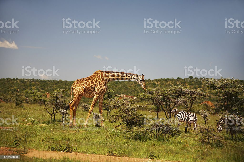 African plains stock photo